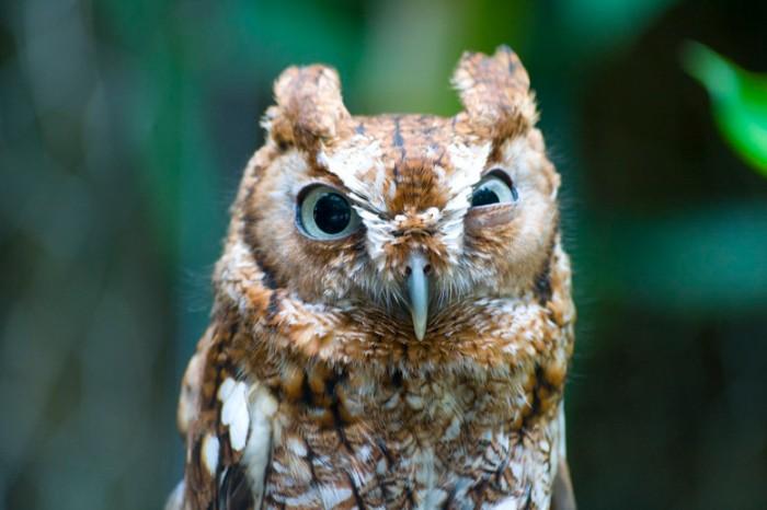 cranky-owl-2